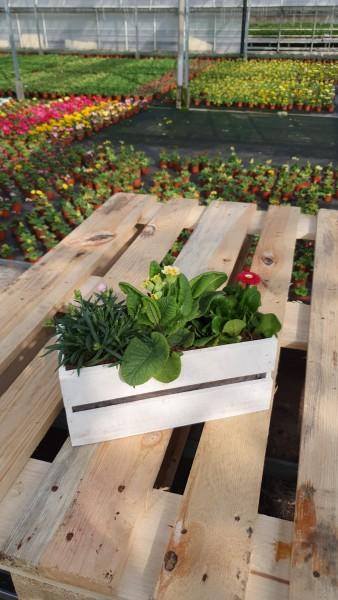 weisses Holzkistli bepflanzt klein