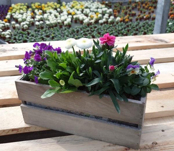 graues Holzkistli bepflanzt klein